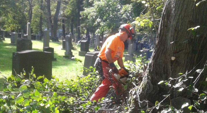 Parks and Recreation worker tidies tree branches in Camp Hill Cemetery.