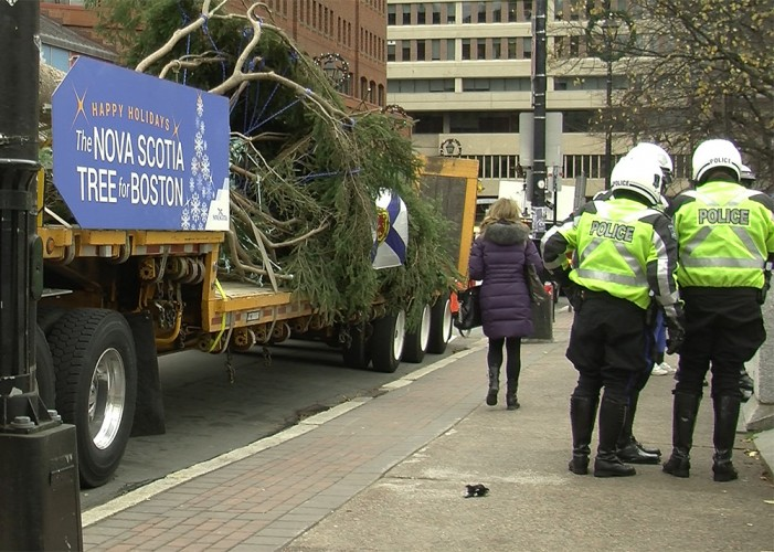 The white spruce tree for Boston is 49 feet tall and 72 years old.