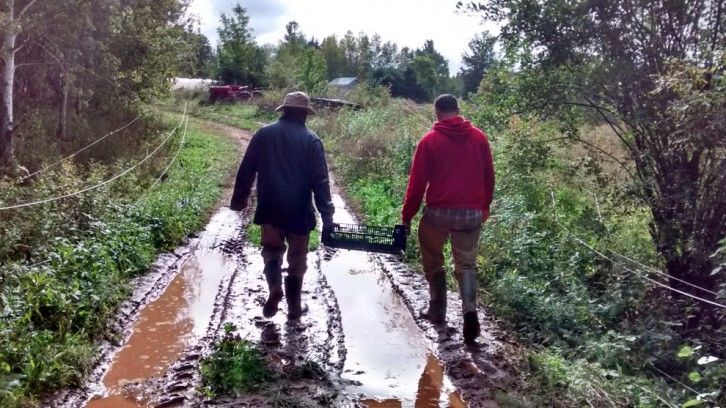 David Greenberg and his friend Pierre Brumaire carry tomatillos back to the farmhouse.
