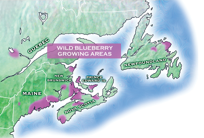 Wild blueberry growing areas.