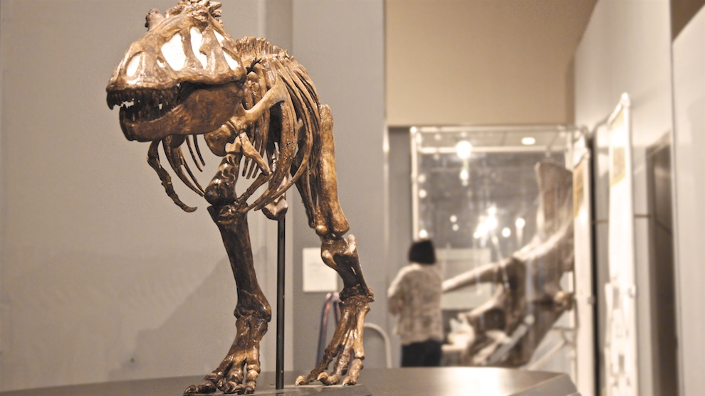 This dinosaur cast is part of the exhibit on loan from the American Museum of Natural History.