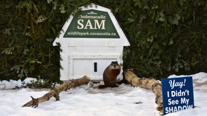 Shubenacadie Sam poses next to his hutch.