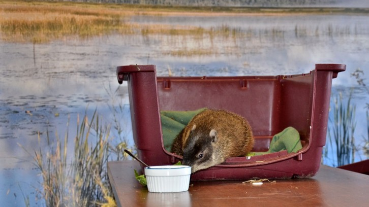Shubenacadie Sam: Behind the scenes.