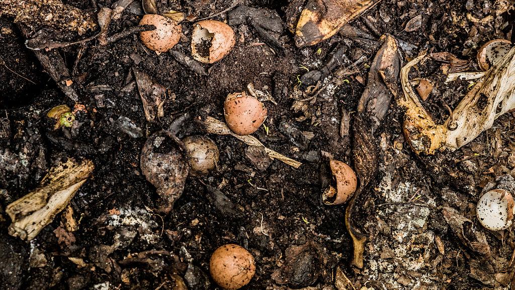 Eggshells and other organic materials decomposing