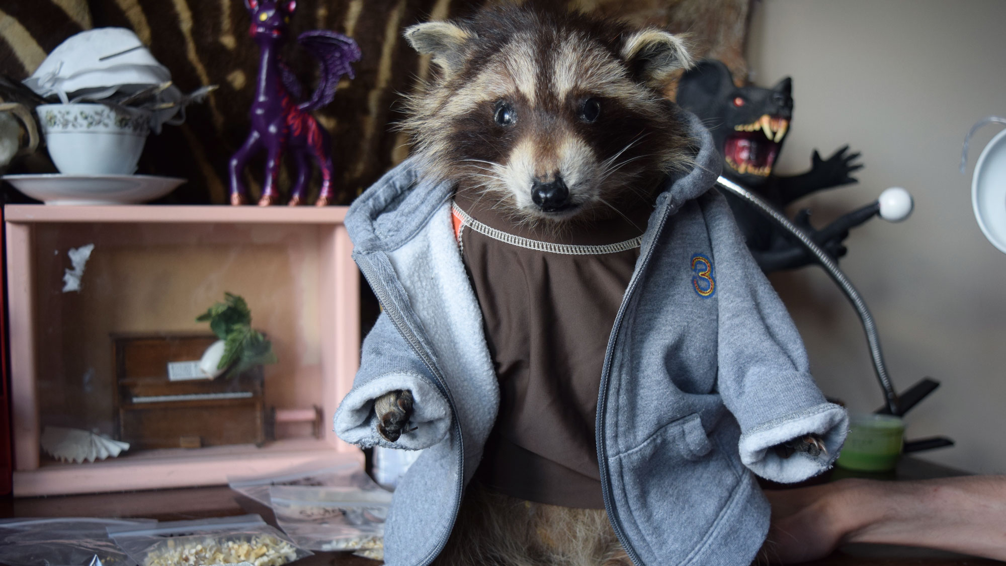 This raccoon, named Derpy, is one of Hillman's many creatures that he dressed up in outfits.