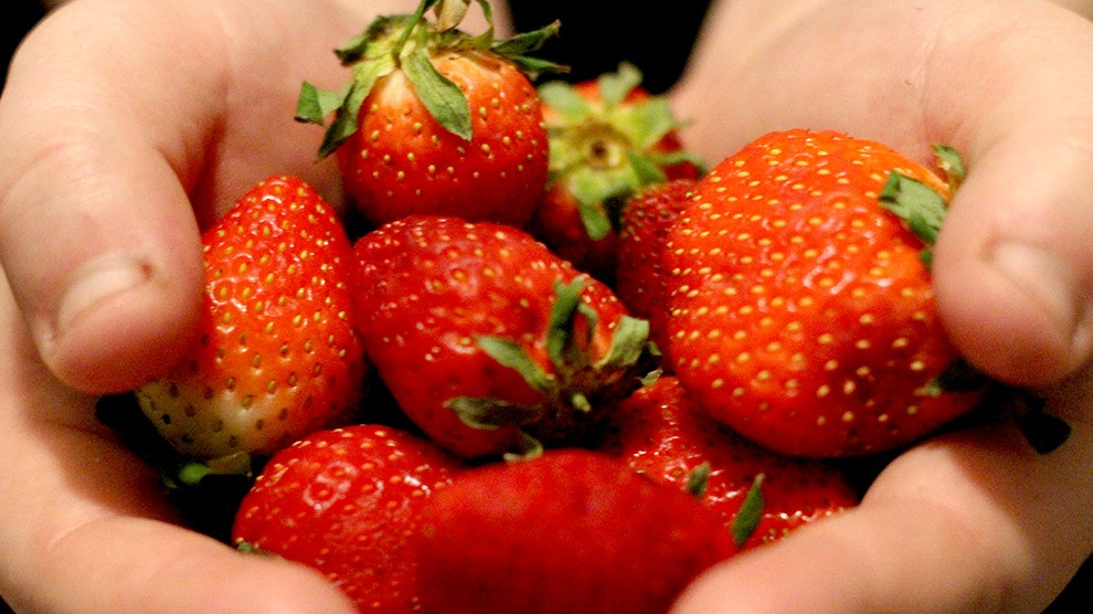 Federal research is hoping to find solutions to Nova Scotia's 2013 strawberry epidemic