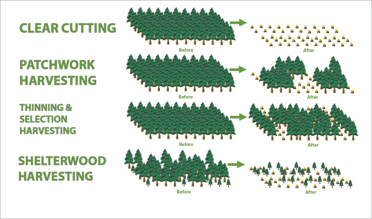 types-of-forestry2