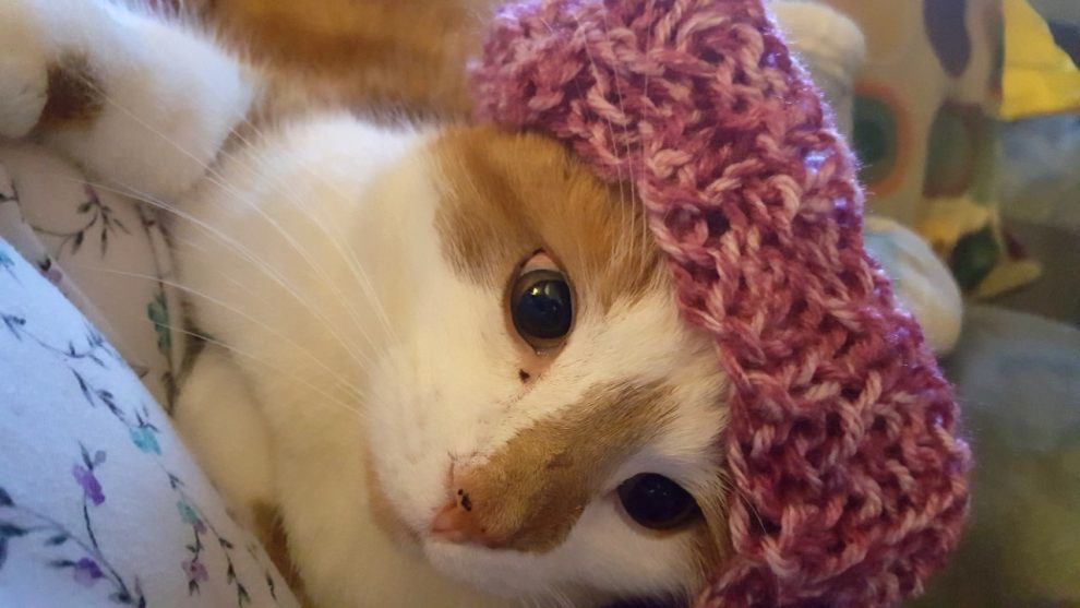 Cinnamon wearing Pussyhat