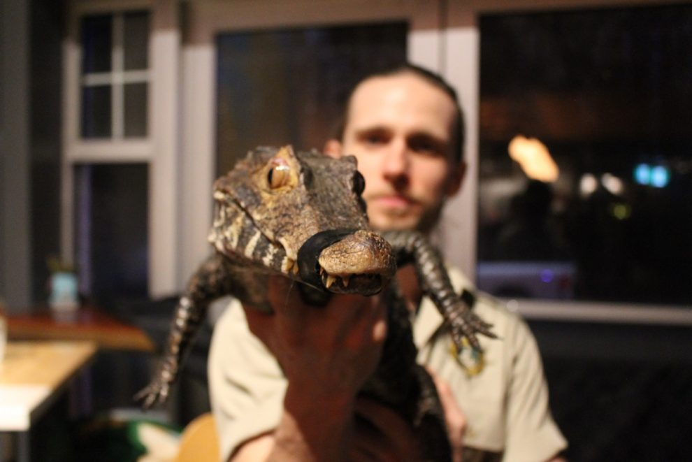 "The small crocodile shown by Shawn Adderley at Good Robot Brewing Company's ""Reptile Takeover"" event."