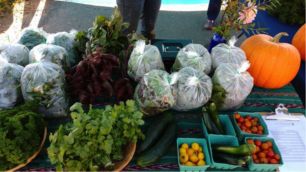 The market garden available at Back to our Roots community garden.