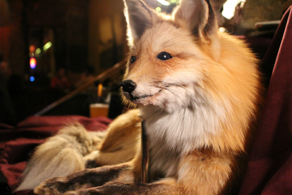 The fox was the main animal drawn by the attendees.