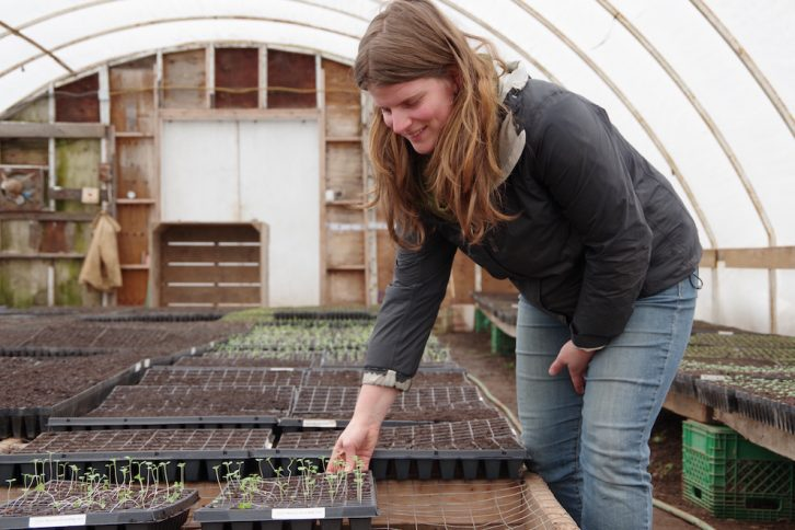 Justine Mentink is the CSA manager at TapRoot Farms.