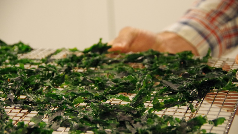 Dardenne says there are two or three weeks during the year when sea lettuce tastes the best.