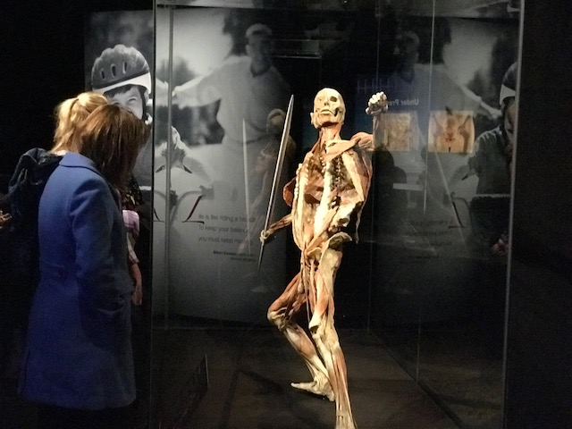 Teachers check out the Body Worlds exhibit at an exclusive sneak peek event