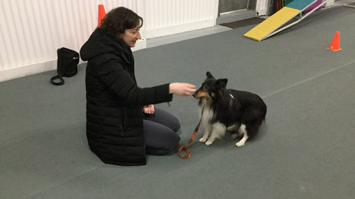 Janet Arbuckle and her sheltie, Devlin.