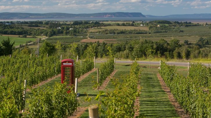 Luckett Vineyards, one of the vineyards located in the Annapolis Valley.