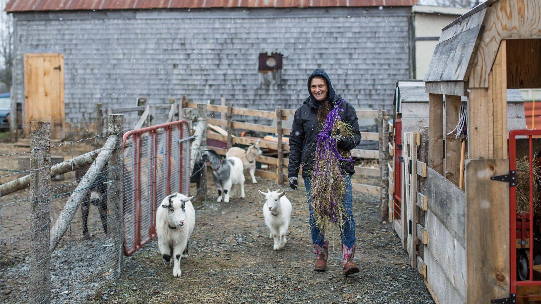 Charlotte feeds goats.