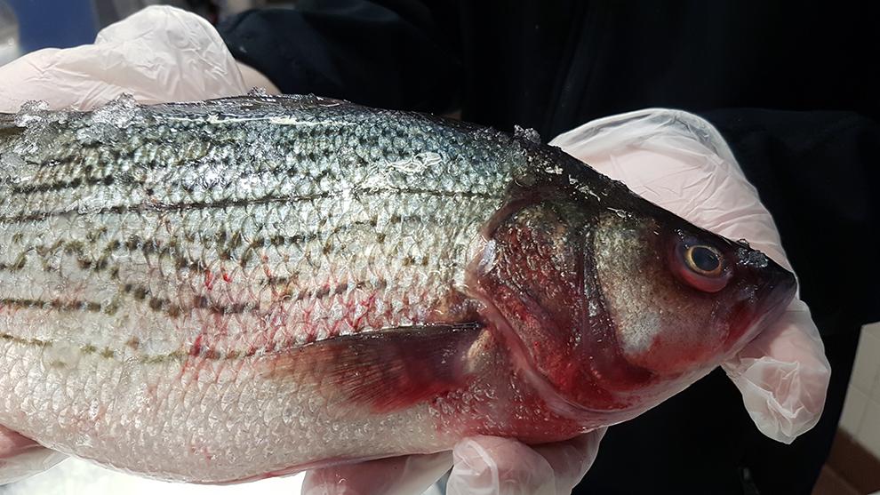 The amendments will protect habitats and increase fish stock