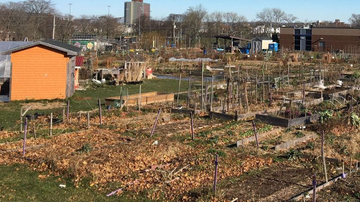 Common Roots Urban Farm's current location as seen from Robie St.