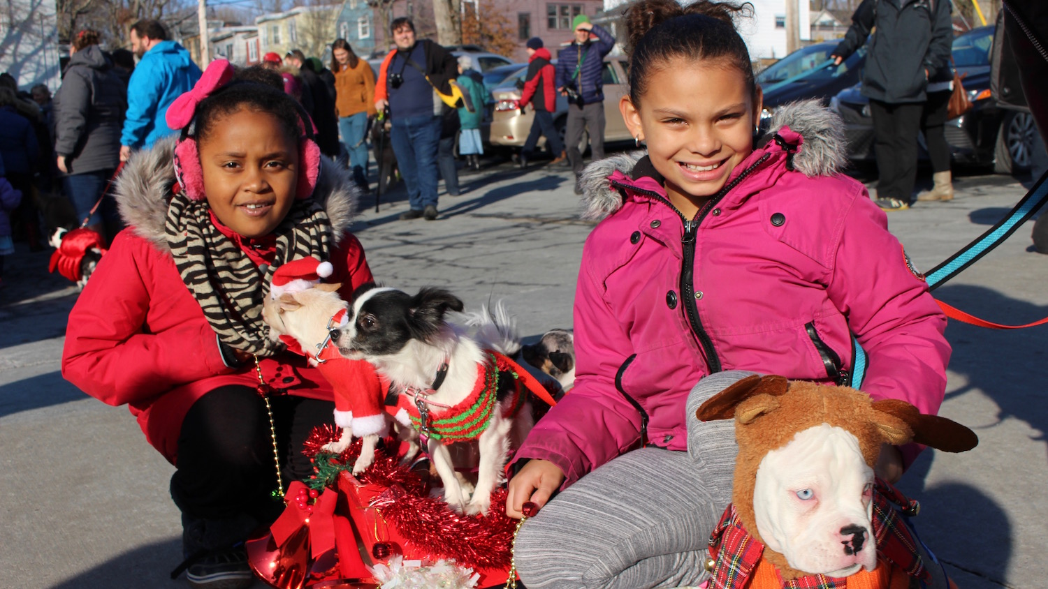 "One of the parade's best dressed award winners, Cheech, Luna and Rocky the chihuahuas pictured with their caretakers Keona and Masondra Brian. ""My favourite part was when I got to pull the sled,"" says Keona."