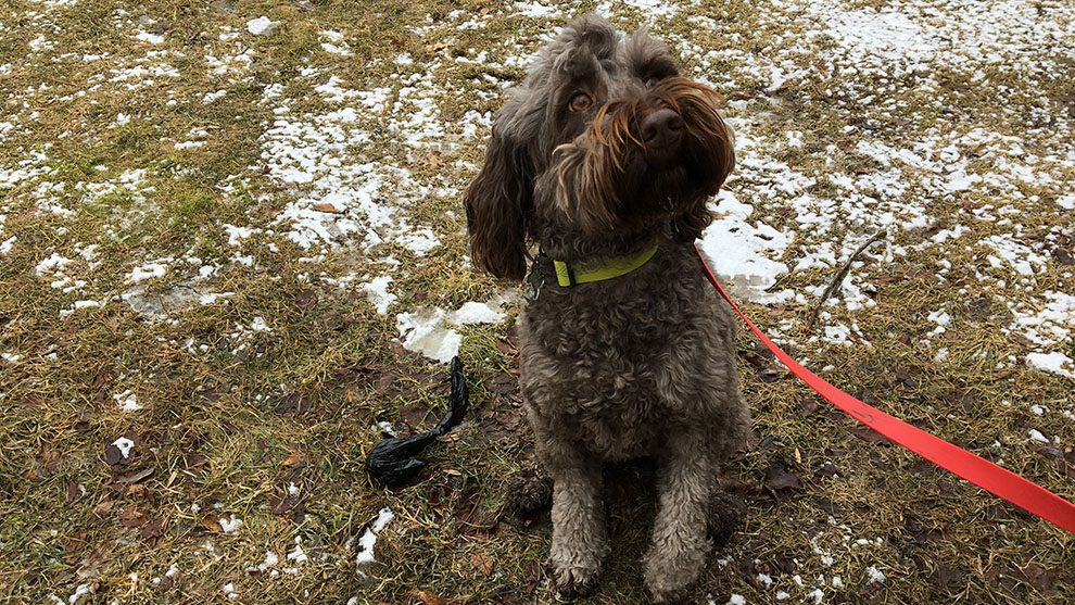 Much ado about dog poo: regional council looks for pet ...