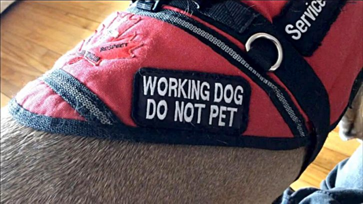 Service dogs can alert owners to their obsessive-compulsive behaviour.