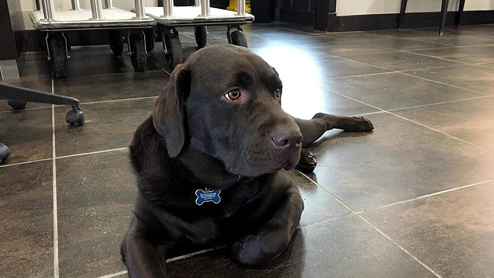 Aero the hotel dog even has his own social media accounts.