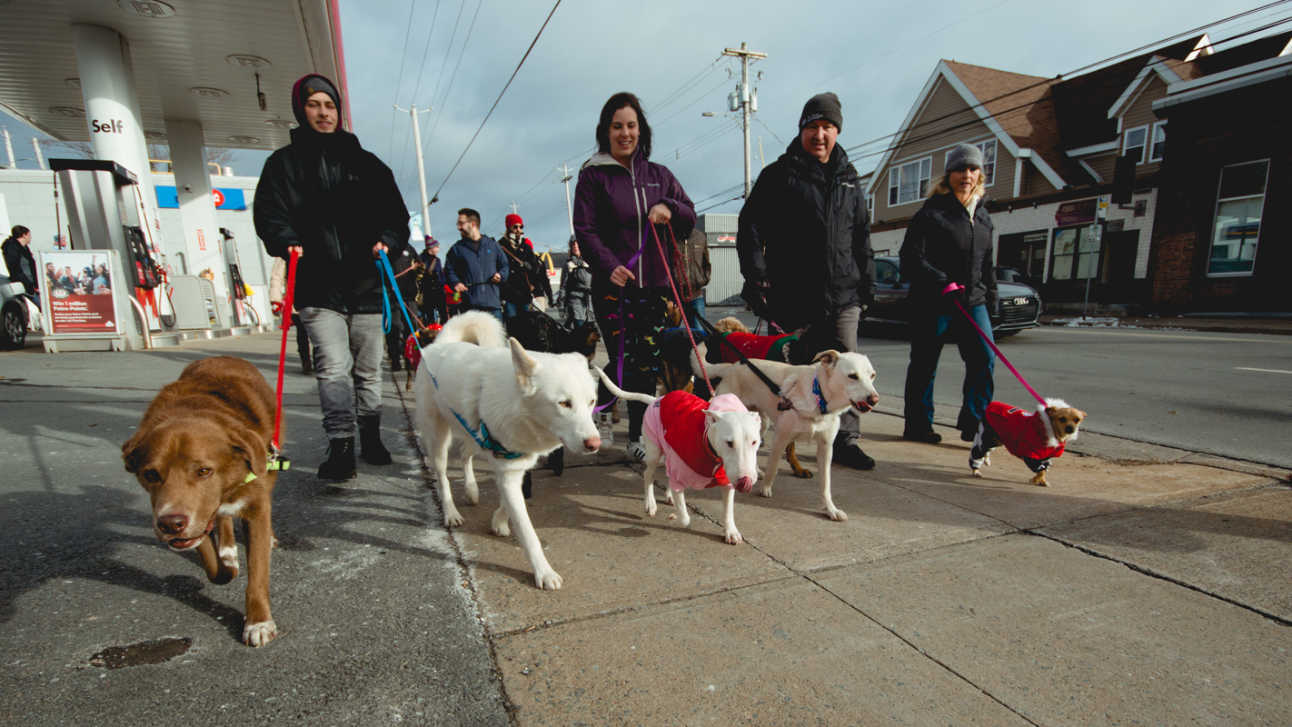 Dog owners walk along Quinpool Road during the pet parade on Saturday.