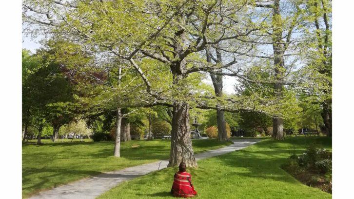Julietta Sorensen Kass, sits in front of a tree named Ichiro- The Ginkgo.