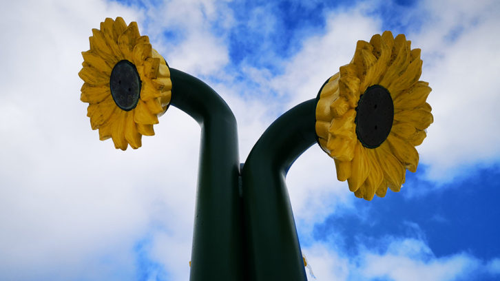These sunflower sprinklers are part of a splash pad at Westmount Elementary School in Halifax.