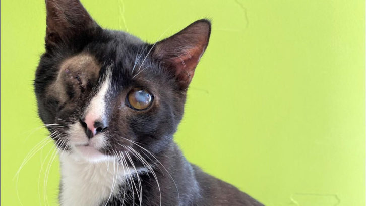 Terrance is one of the 25 cats that have already been adopted from the 80 that were rescued.