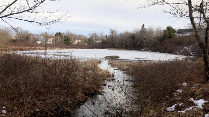 Catamaran Pond is small, but the Spryfield Defenders say development would have a big effect on the watershed.