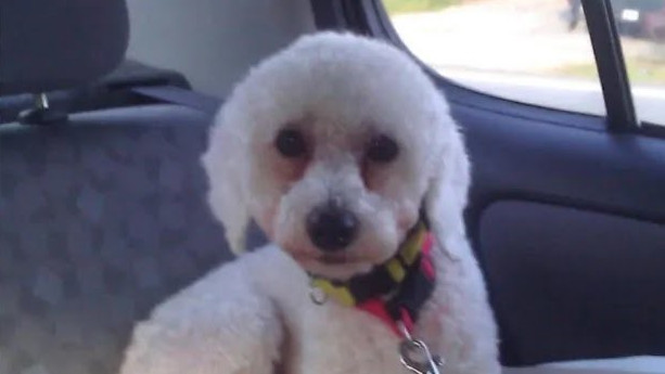 Mike Smaggus and Snoopy, a little Bichon Frise, were separated on May 29, 2020.
